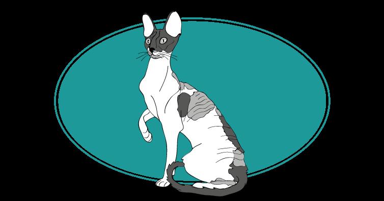 Cornish Rex chat animal races : tout savoir sur les chats