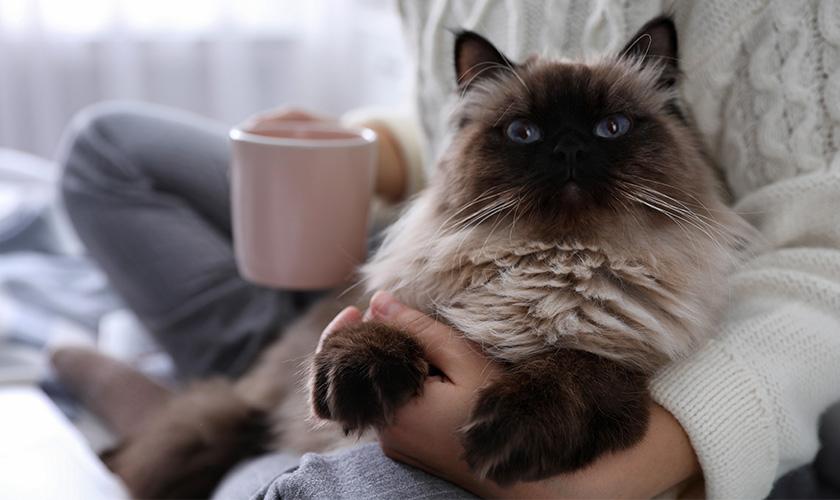 Confinement avec son chat : les précautions à prendre
