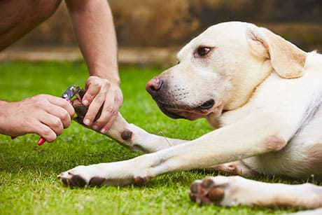 Couper griffe chien : Bien-être