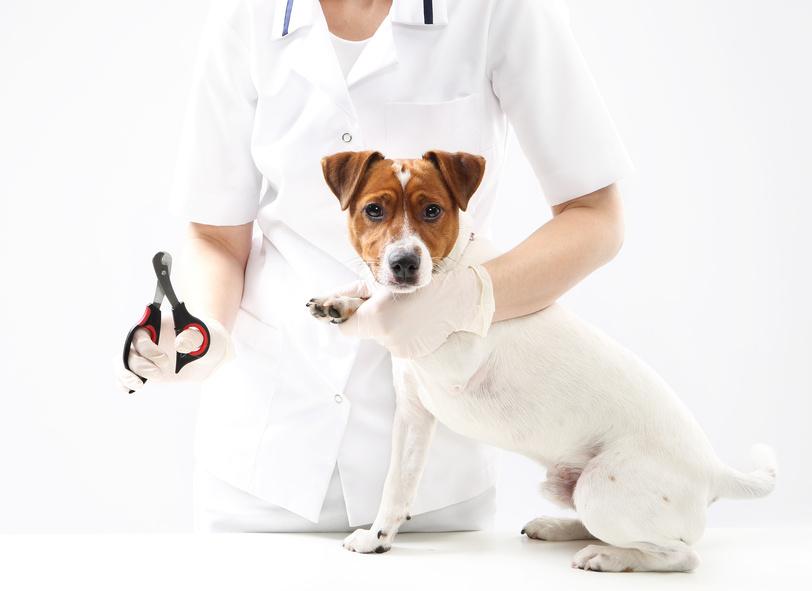 Comment prendre soin et couper griffe de votre chien - Comment couper les griffes de son chat ...