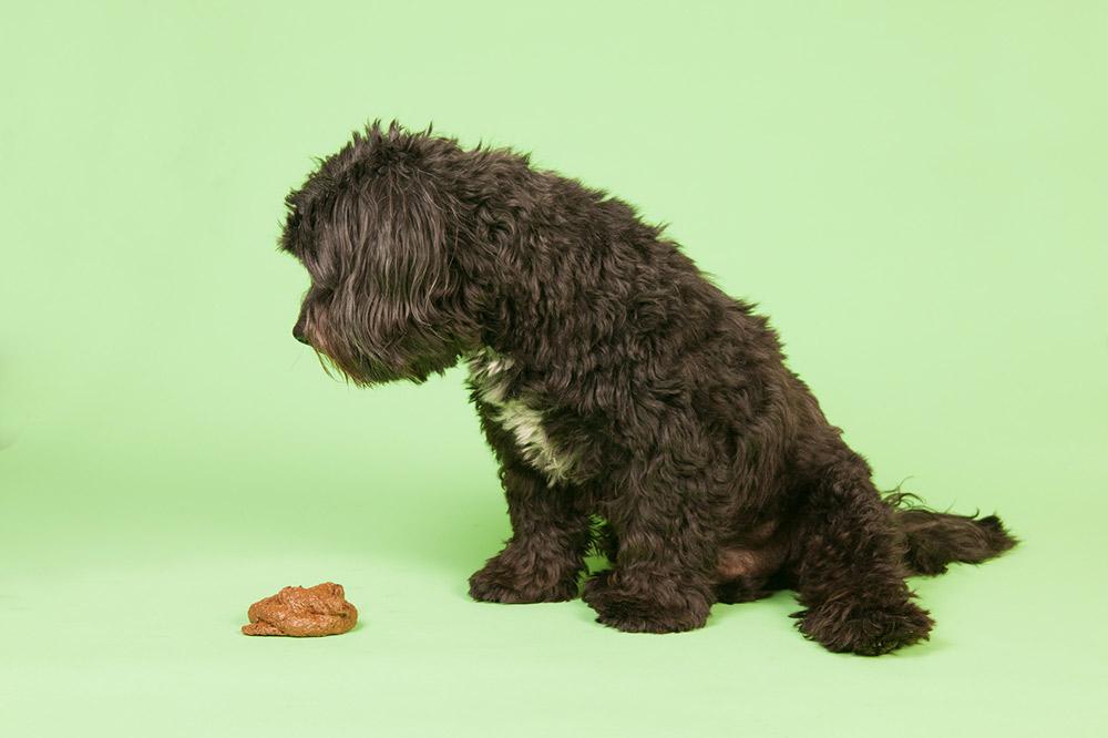 Mon chien aime ses crottes