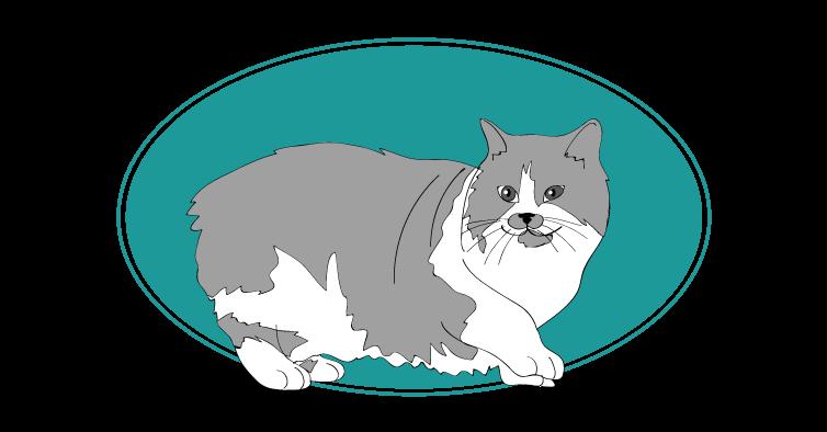 Cymric chat animal races : tout savoir sur les chats