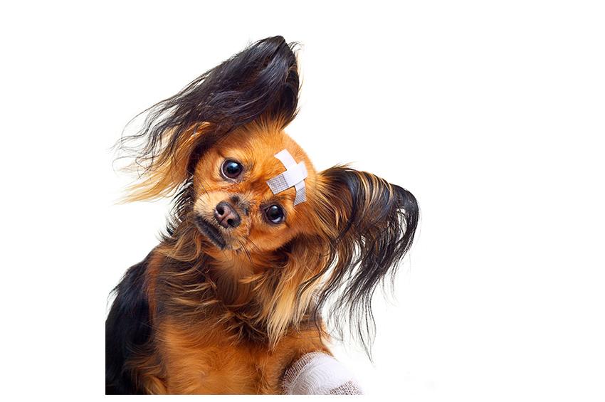 Danger Domestique pour votre chien : Accident