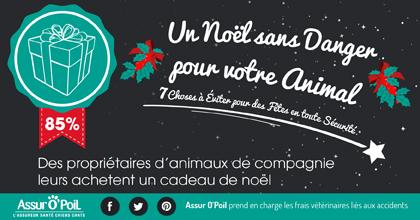 Noel des animaux : 85 % des propriétaires achètent un cadeau de Noel pour leurs animaux : Actualité