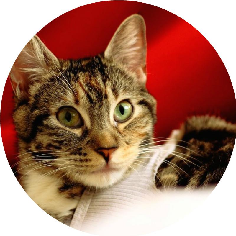 Les dangers de Noel pour le chat, noel des animaux : Actualité