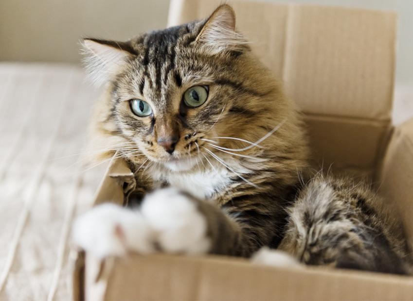 Déménager avec un chat : Comment bien vivre son déménagement avec son chat