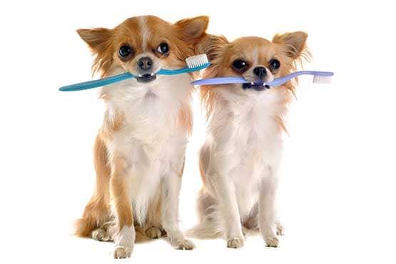 Les dents du chien : Bien-être