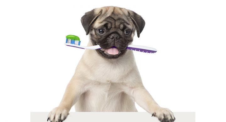 Dentition chien :Comment brosser les dents de son chien ?