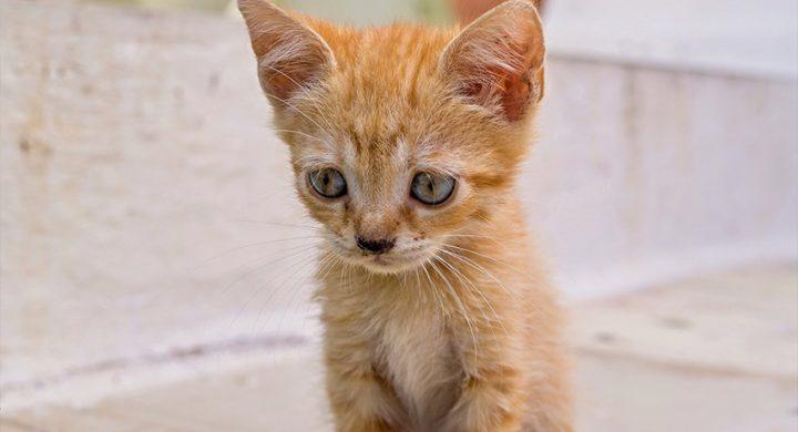 Depression du chat : SAvoir si mon chat est depressif