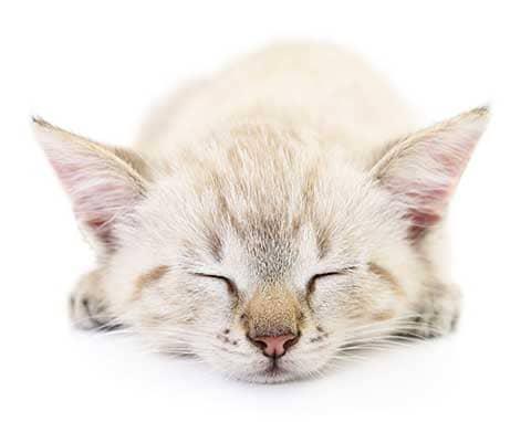 sympt me et solution de la d pression chez le chat assur o 39 poil. Black Bedroom Furniture Sets. Home Design Ideas