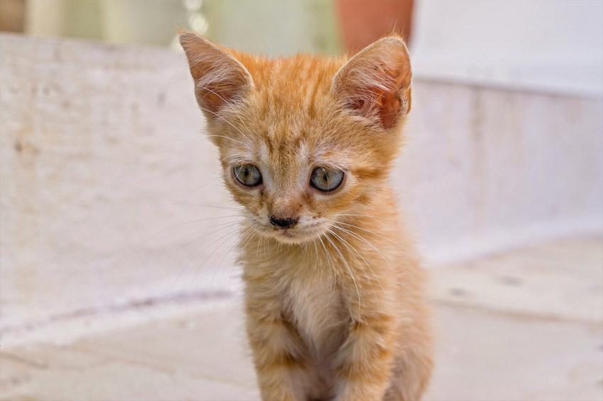 rencontre chaton chat adulte site de rencontre de q
