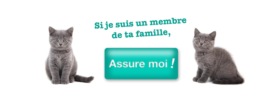 Article box chat, assurance pour chat