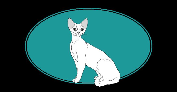 Devon Rex chat animal races : tout savoir sur les chats
