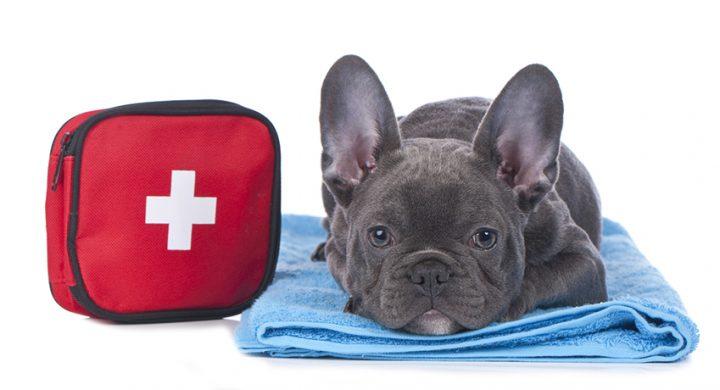 Diabete chien : Sante
