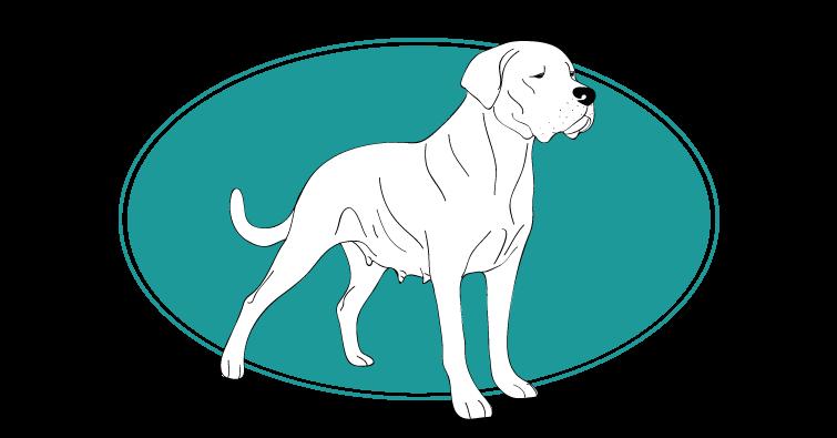 Dogue Argentin, toutes les races de chien