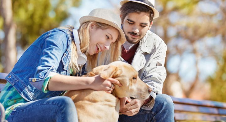 Donner son chien : Quellle procédure pour donner son chien à un refuge ou une tierce personne