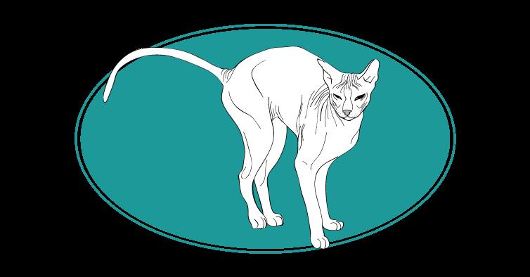 Donskoy chat animal races : tout savoir sur les chats