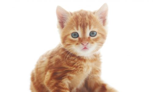 Douleur chez lz chat : savoir si mon chat est malade