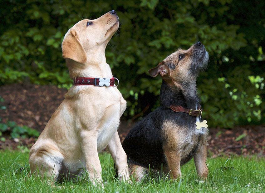 Education chien : Faire appel à un dresseur pour dresser son chien