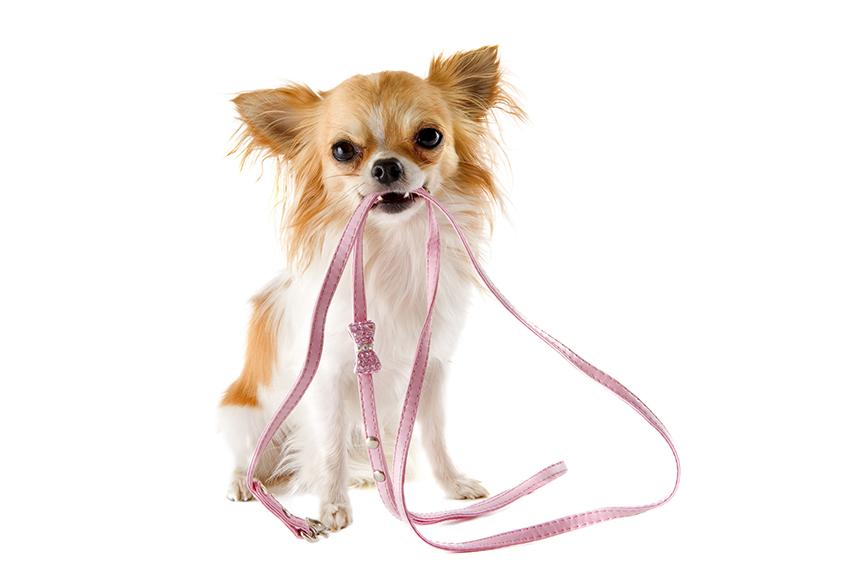 Comment bien dresser son chien ? Les techniques de base. Assurance Chien, Assur O' Poil, Assurances Chiens