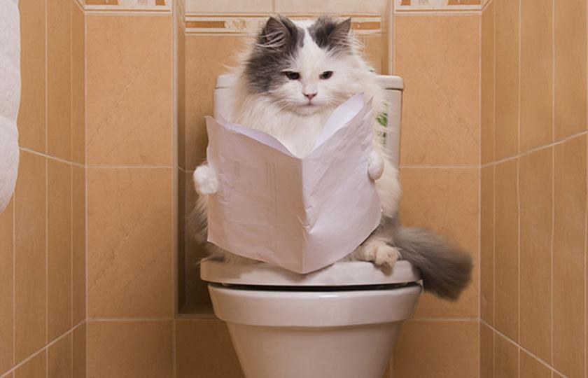 Education chat : 5 astuces à suivre pour apprendre son chat à aller aux toilettes