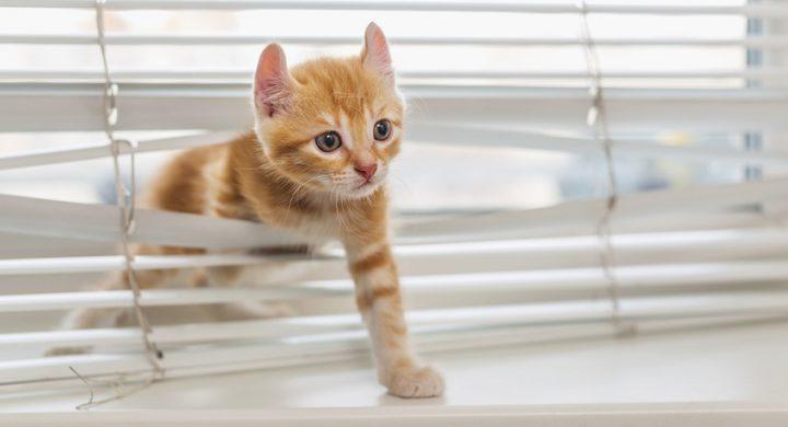 Education chat : Chat du voisin qui vient chez moi, chat qui va chez les voisins