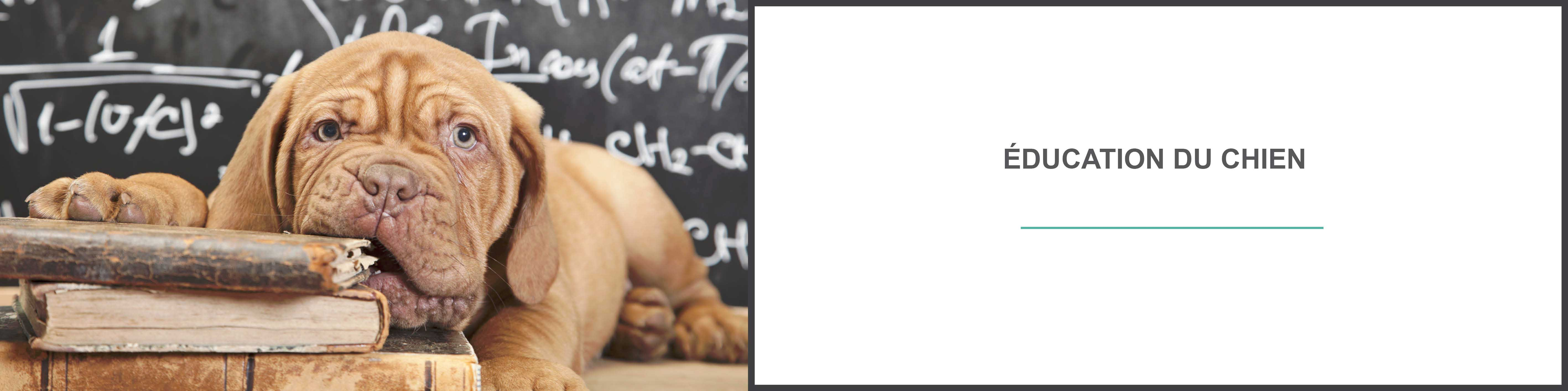 Education chien : éduquer son chien et comportement