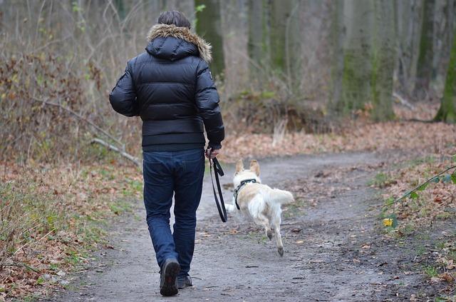 Laisse chien, comment faire pour que mon chien ne tire plus en laisse