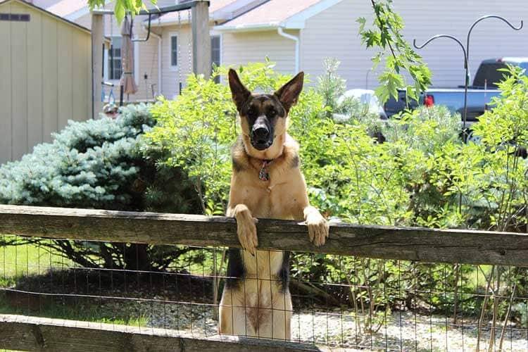 Education : clôture pour chien