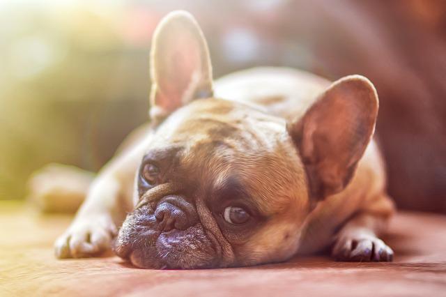 Education chien : Mon chien aboie tout le temps