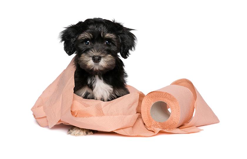 comment faire pour apprendre à son chien à être propre