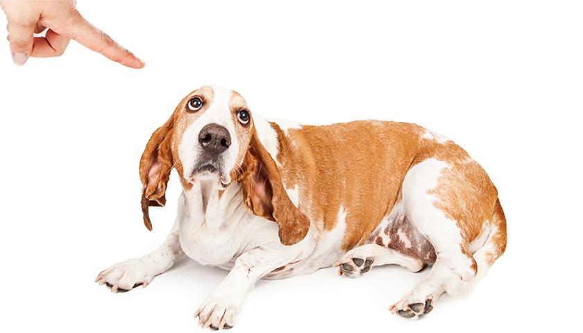 Education chien : 5 bons réflexes à adopter pour punir son chien, punir un chien, punition chien