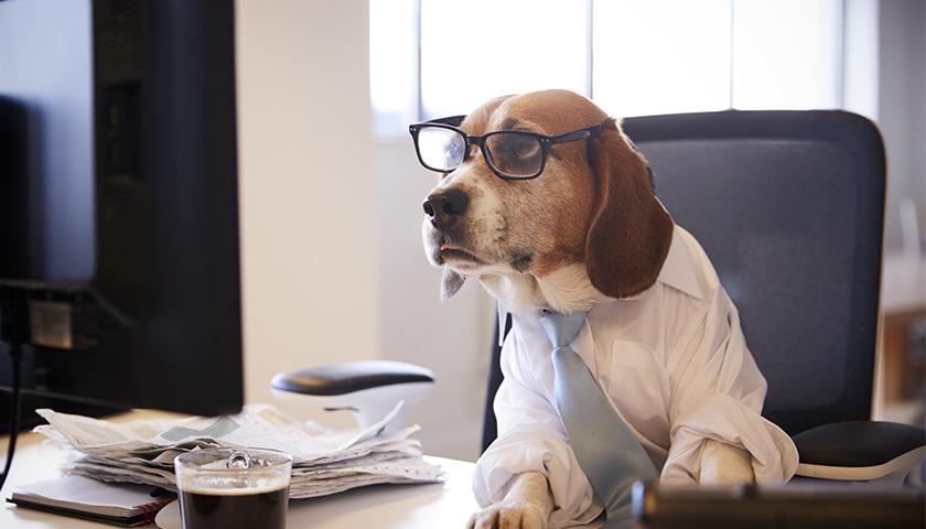 Emmener son chien au travail
