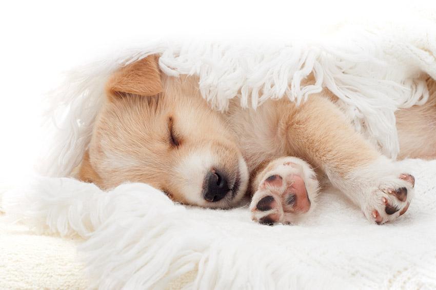 Epilepsie chien : que faire lors d'une crise d'epilepsie