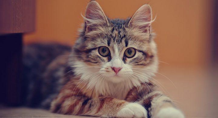 Epilepsie du chat : symptômes et traitement