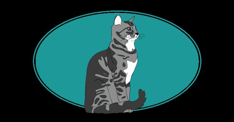 Chat Européen chat animal races : tout savoir sur les chats