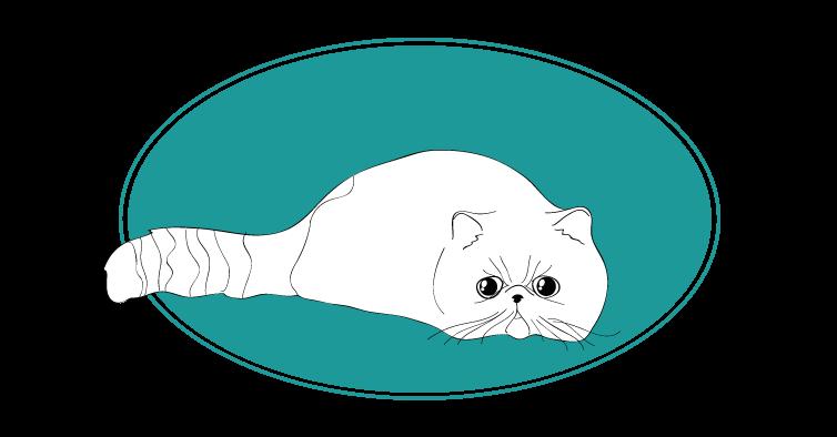 Exotic shorthair chat animal races : tout savoir sur les chats