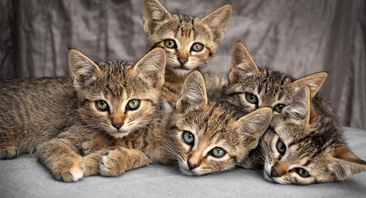 Faire reproduire son chat : que dit la législation