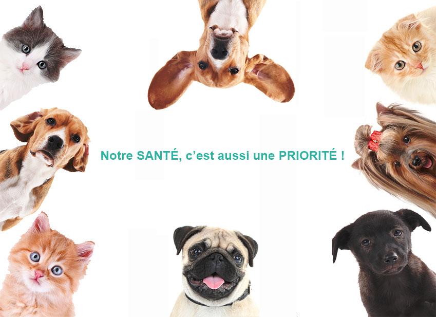 Assurance animaux : Faire un devis gratuit et sans engagement