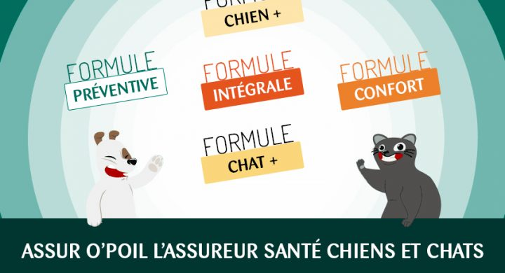 Formules assurance animaux : mutuelle chien, mutuelle chat