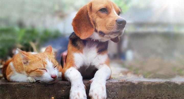 Comment fonctionne la franchise de l'assurance animaux Assur O'Poil