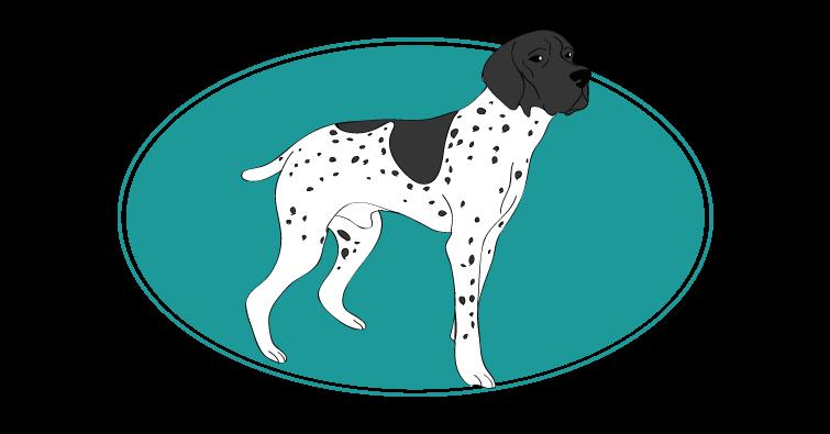 l-ancien-chien-d-arret-danois-assuropoil