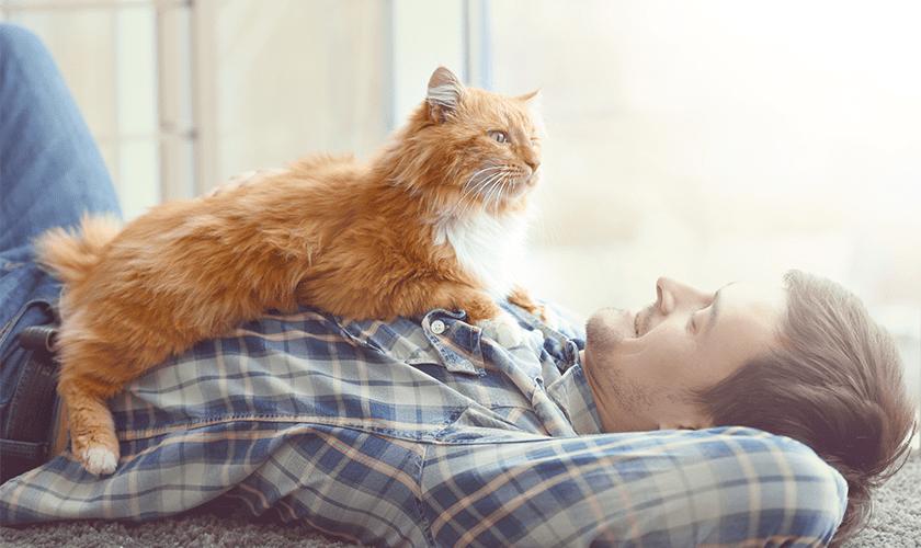 Occuper son chat : Comment bien gérer le confinement avec son chat
