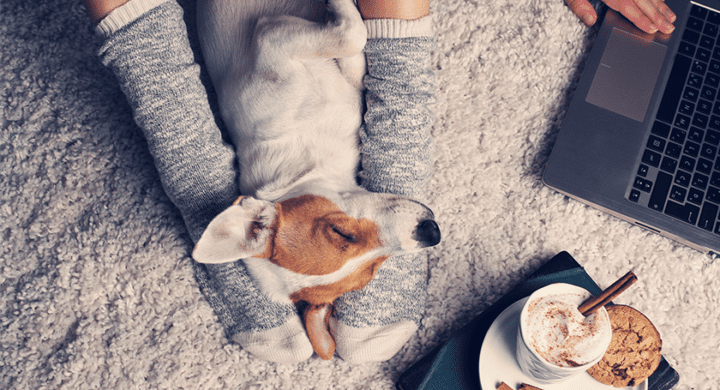 Occuper son chien : Comment gérer le confinement avec son chien