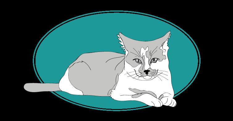 Chat de gouttière animals races : tout savoir sur les chats
