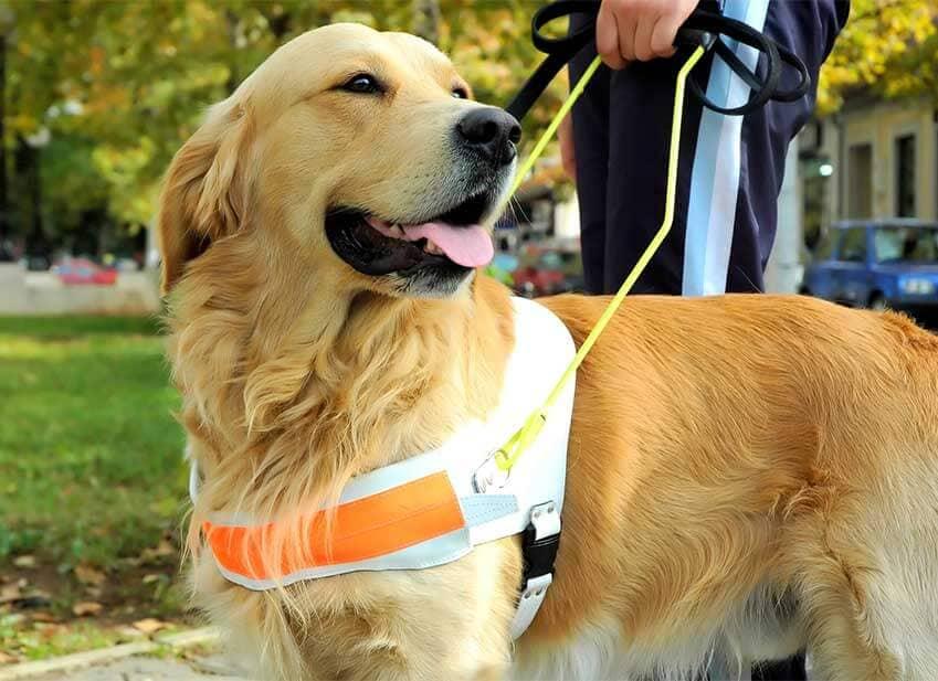 L'handicape, le chien une aide bénéfique pour le bien être