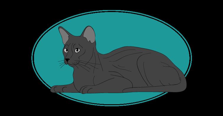 Havana Brown chat animal races : tout savoir sur les chats