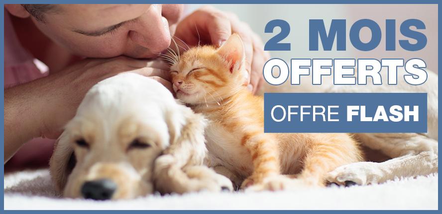 Offre 2 mois offerts : Assurer votre chien ou votre chat