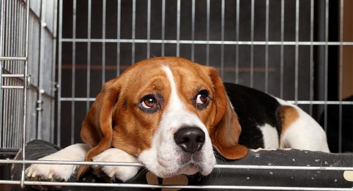 La France interdit la vente d'animaux en animalerie