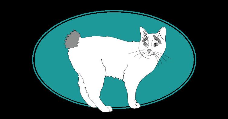 Japanese Bobtail chat animal races : tout savoir sur les chats